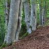 Naturfotografie im Mühl-/Waldviertel